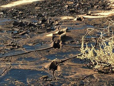 אסון הנפט ב שמורת עברונה הנגב