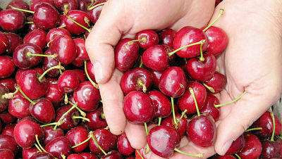 דובדבנים פירות
