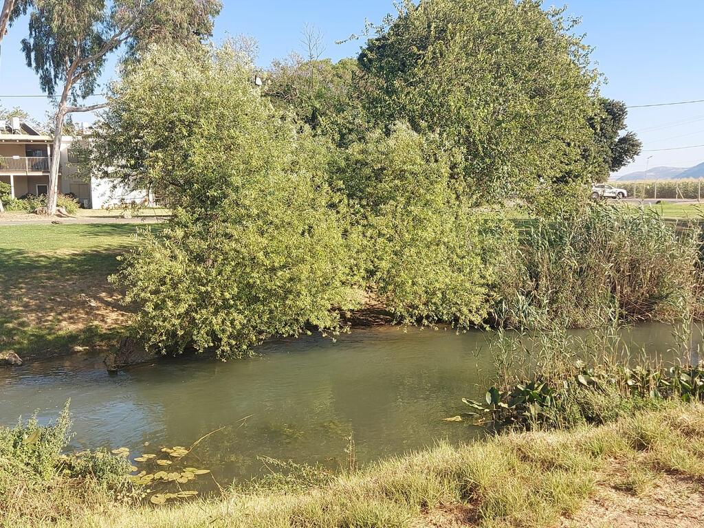 נהר הירדן ליד קיבוץ נאות מרדכי