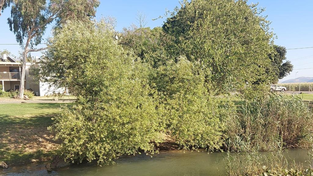 נהר הירדן ליד קיבוץ נאות מרדכי, צילום: אהרון דמרי מוביל קבוצת לא תיקחו לנו את הטבע