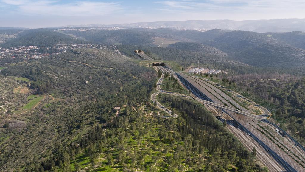 הדרך הירוקה: כבישים שעדיין לא מאוחר לגנוז