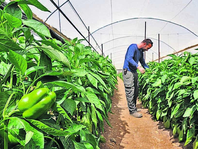 חקלאי חקלאות בישראל