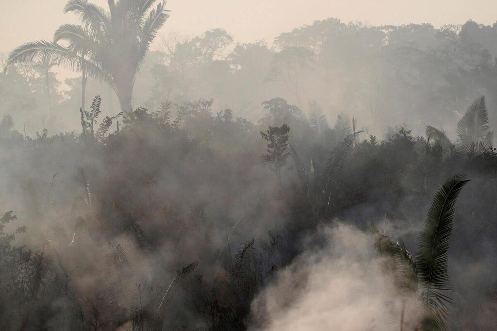 שריפה ב יערות הגשם ב אמזונס ברזיל
