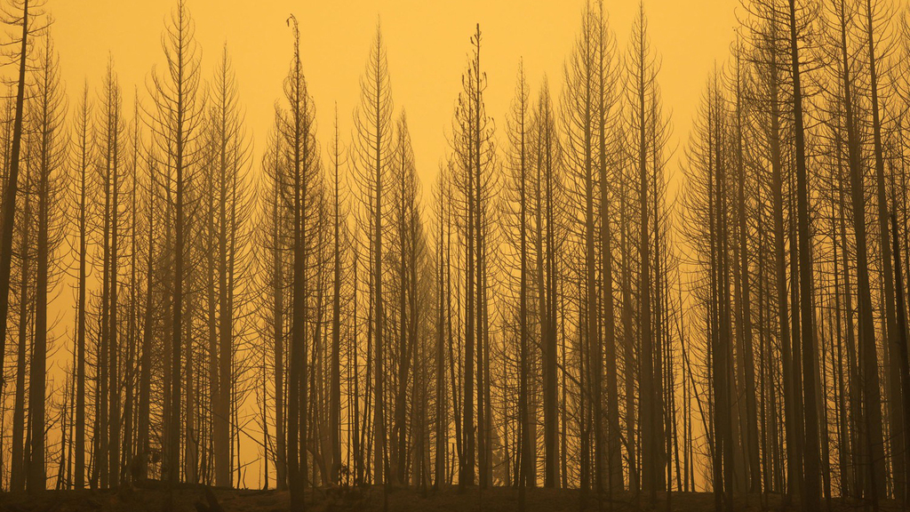 פוטו משבר האקלים שריפות קליפורניה