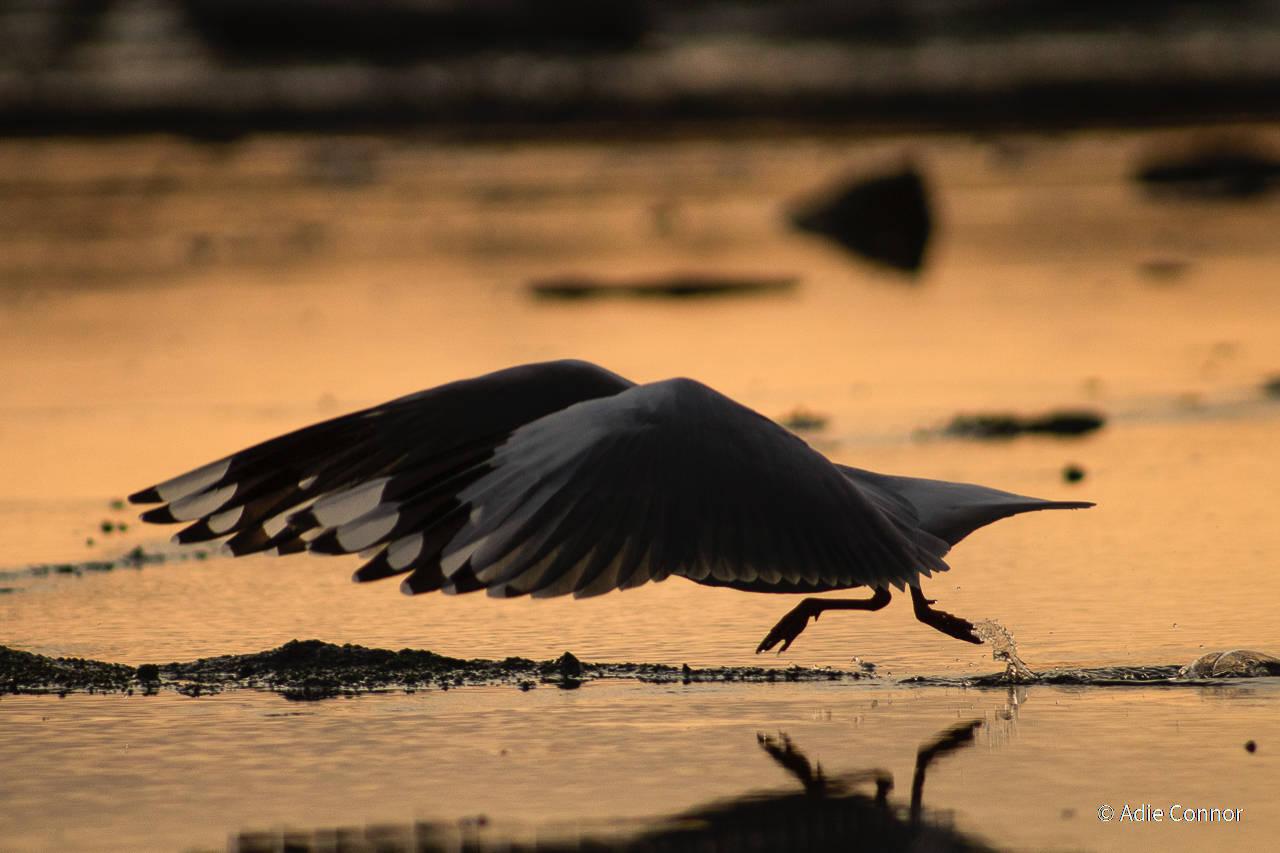 פוטו תחרות צילומי טבע אוסטרליה נחיתה ציפור
