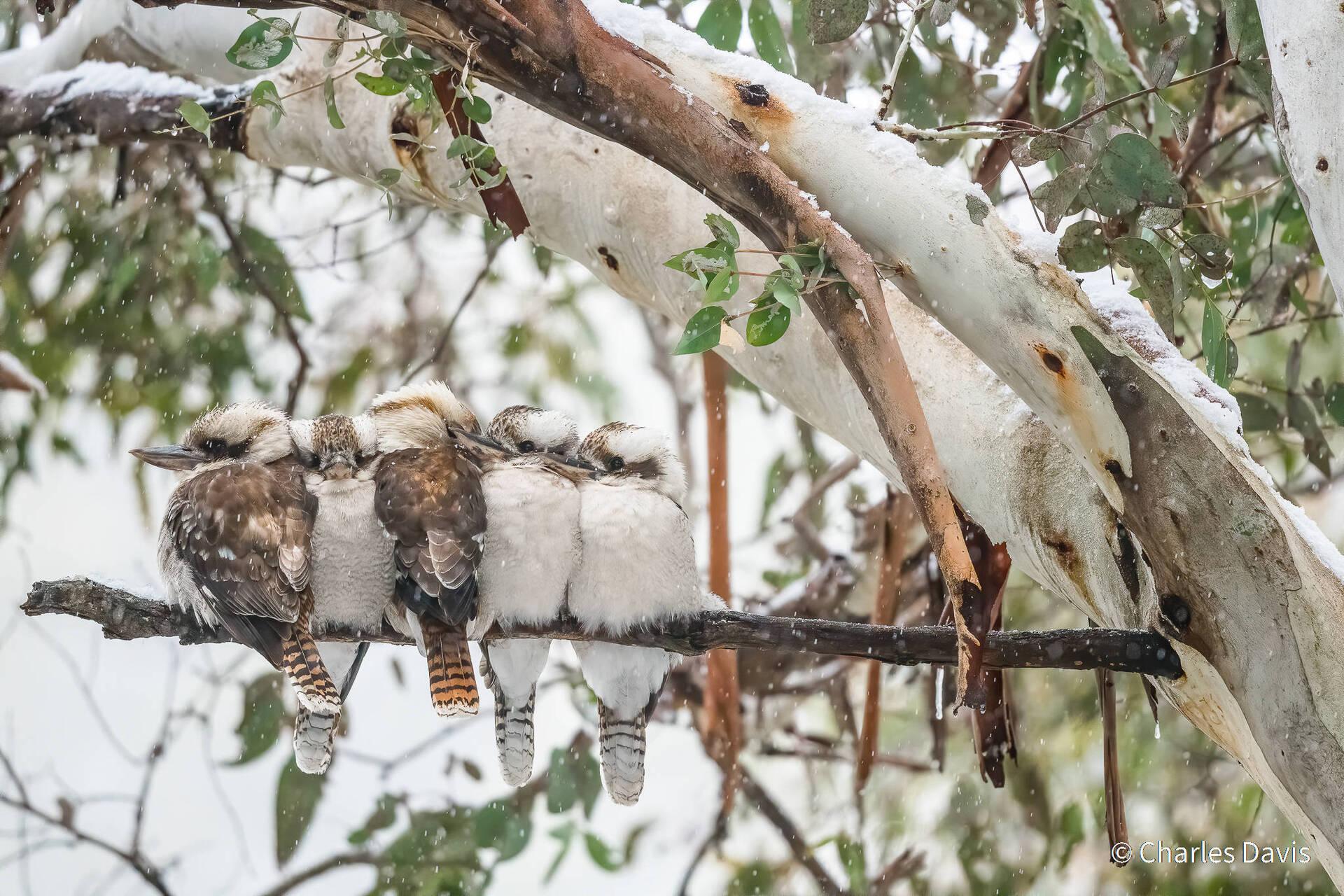 פוטו תחרות צילומי טבע אוסטרליה ציפורים מצטופפות