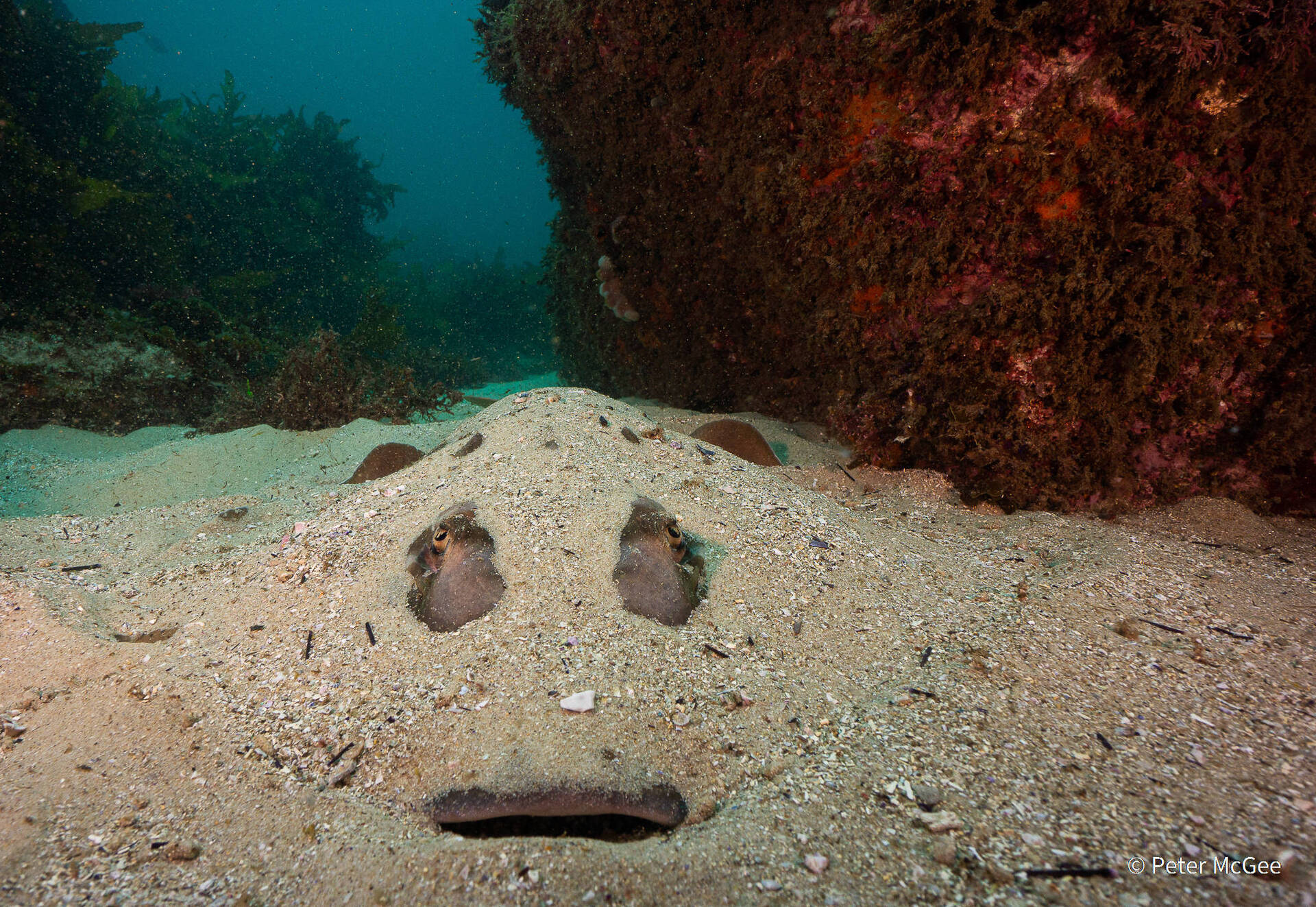 פוטו תחרות צילומי טבע אוסטרליה מאנט הריי