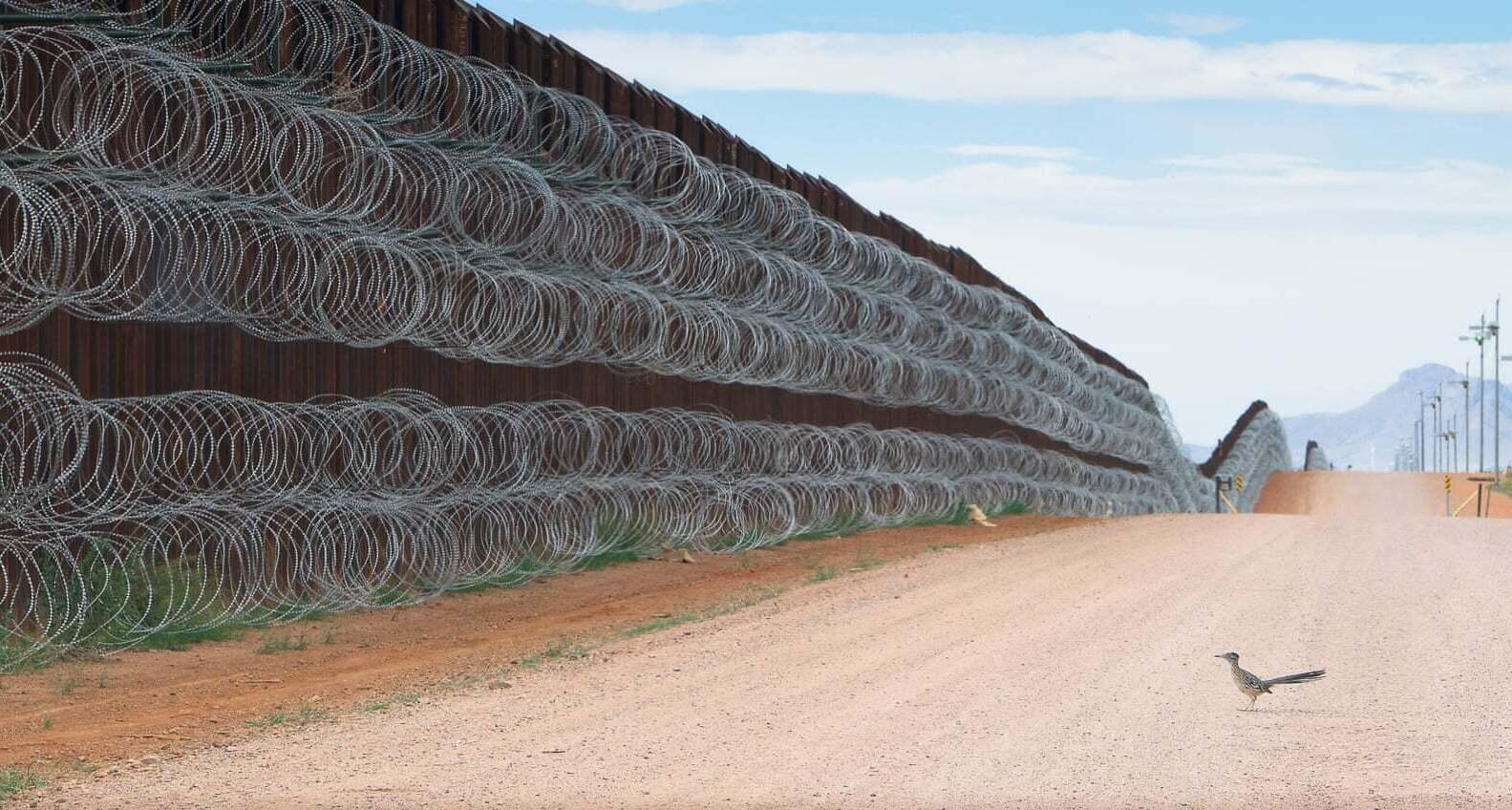 פוטו תחרות צילומי ציפורים 2021 ציפור גבול מקסיקו