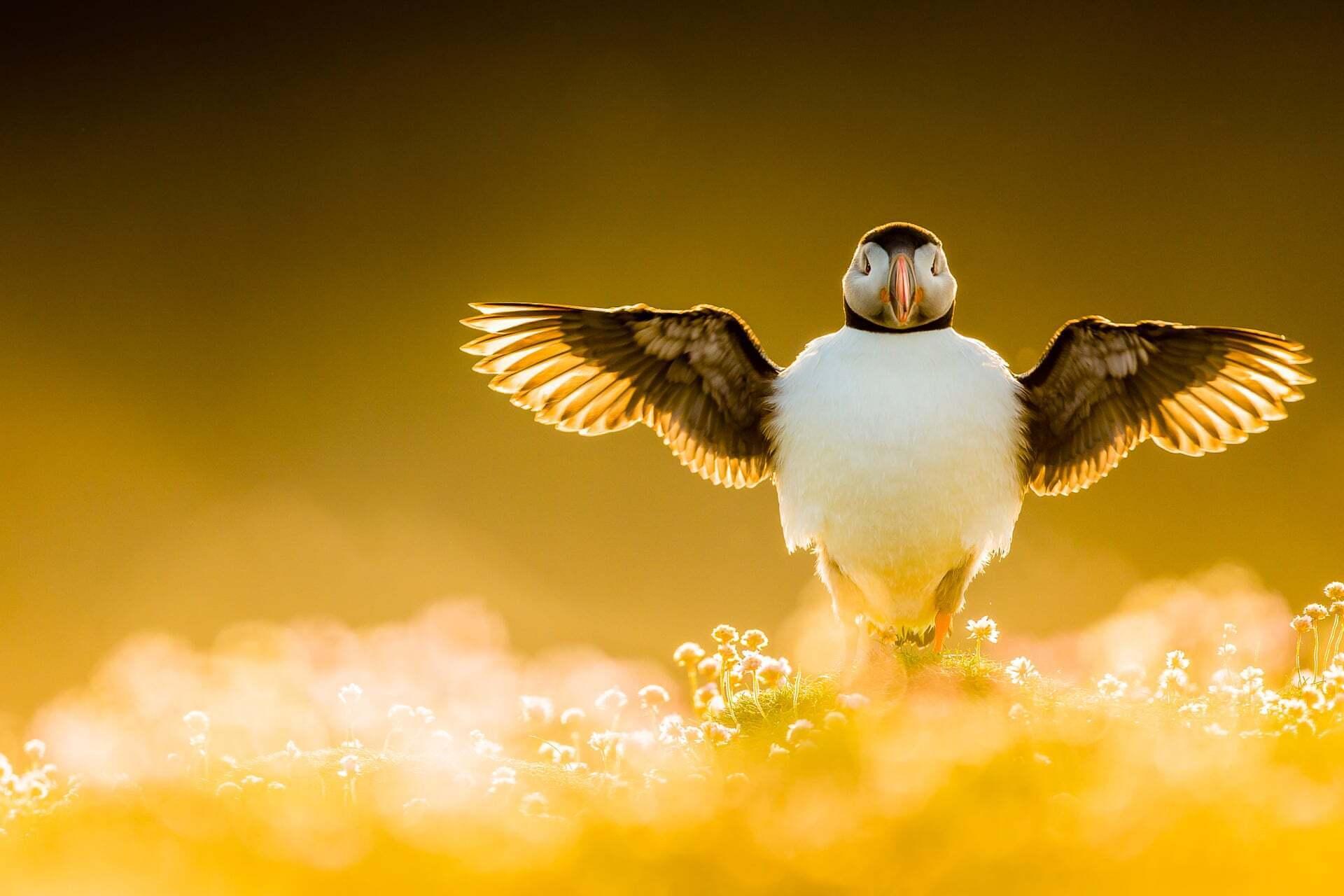 פוטו תחרות צילומי ציפורים 2021 מותחת כנפיים
