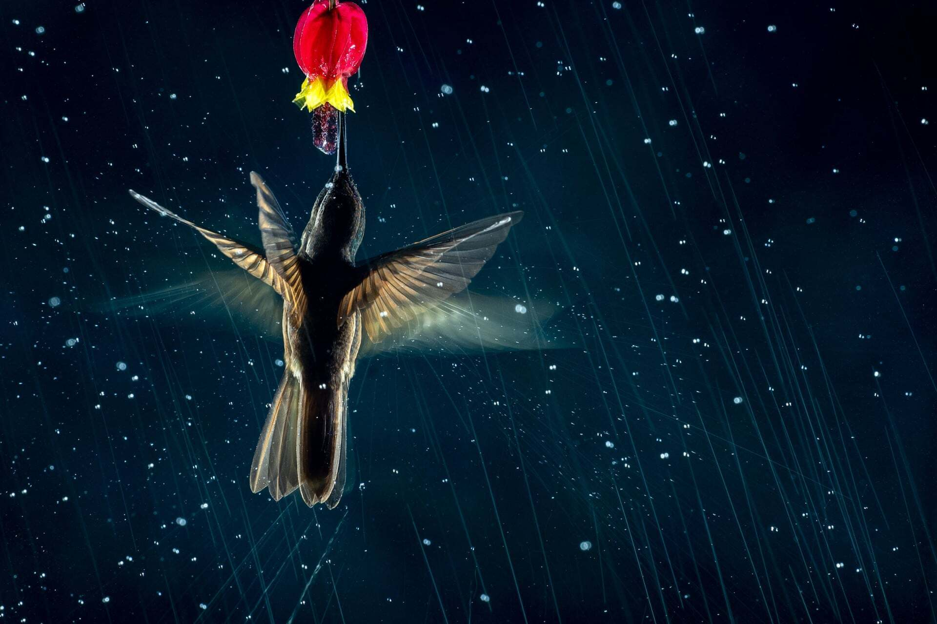 פוטו תחרות צילומי ציפורים 2021 יניקת צוף