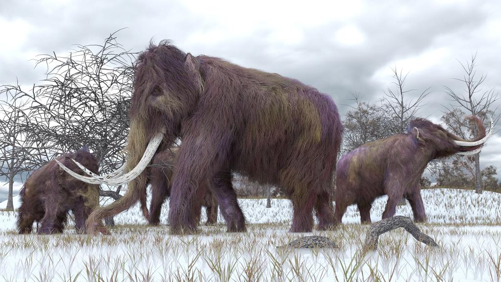 ממותה צמרית woolly mammoth