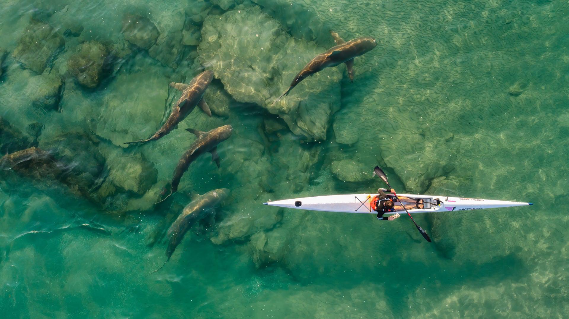 פוטו תחרות צילומים מדאונים 2021 כרישים חוף חדרה