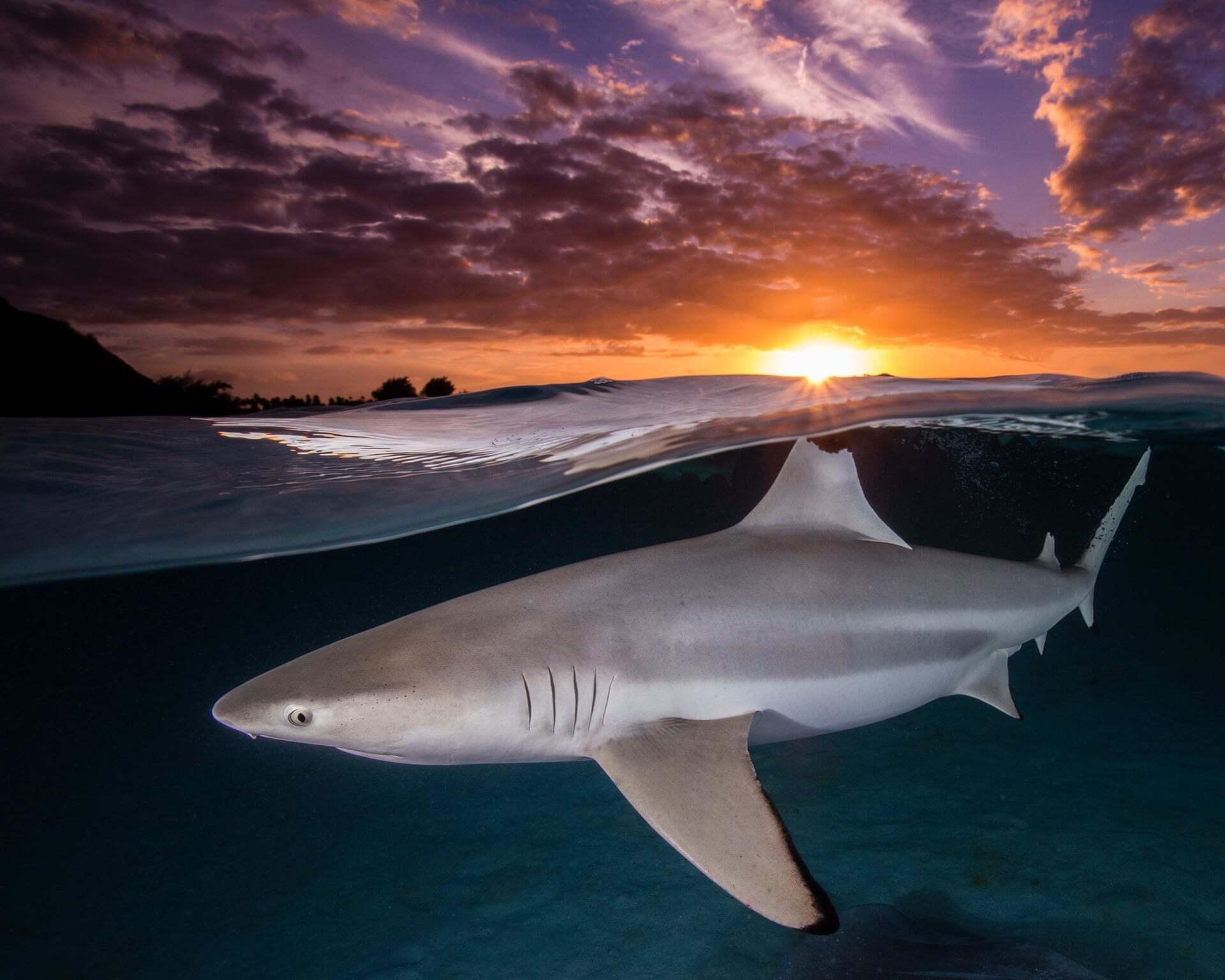פוטו תחרות צילומים באוקיאנוס 2021 כריש