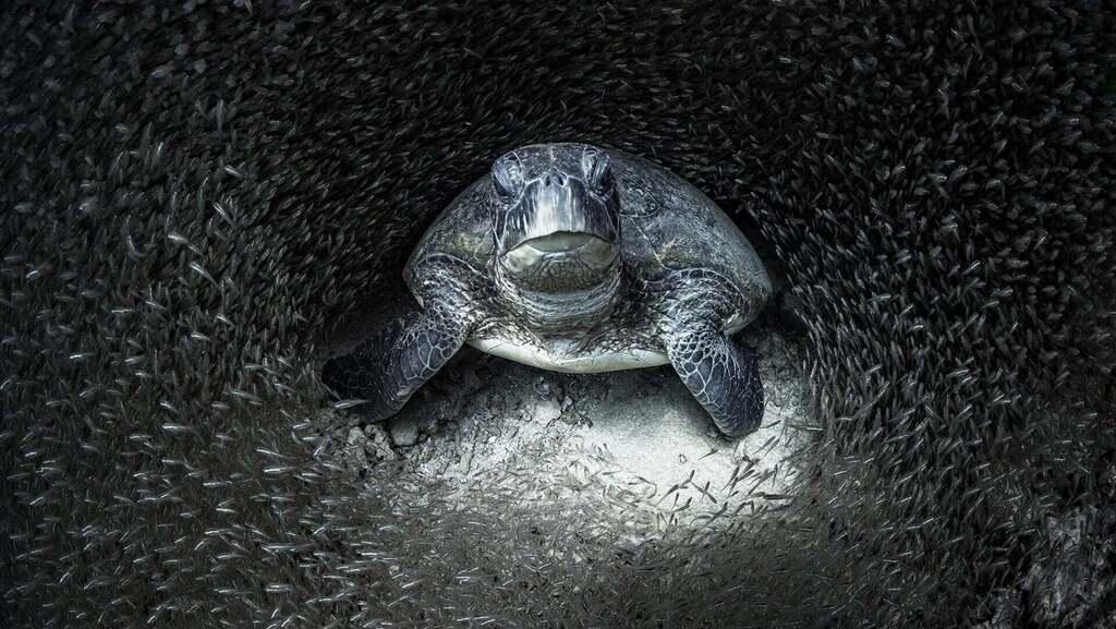 עוצרות נשימה: תמונות זוכות מתחרות צילומים מתחת למים