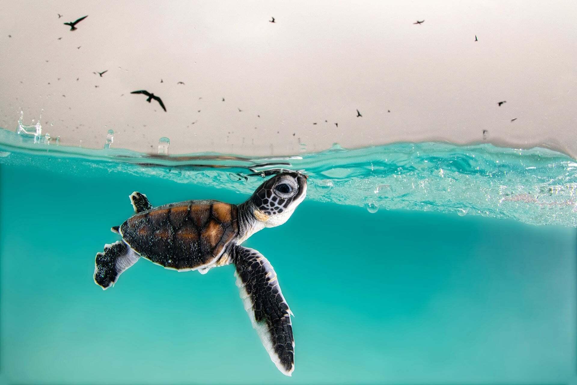 פוטו תחרות צילומים באוקיאנוס 2021 צב ים