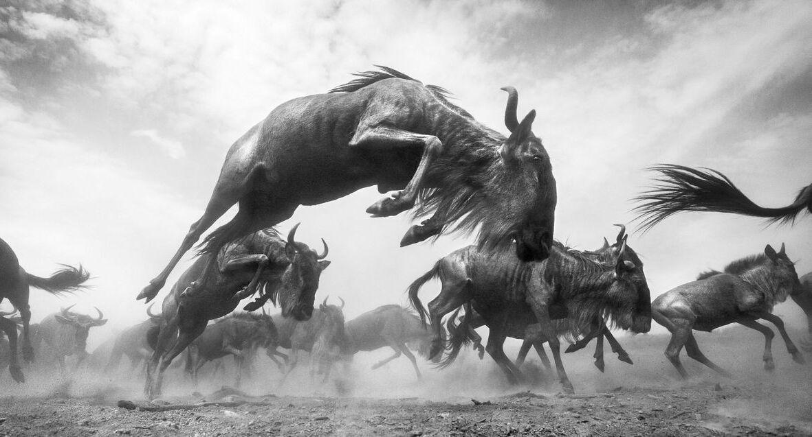 פוטו תחרות צילומי טבע The Nature Conservancy קניה