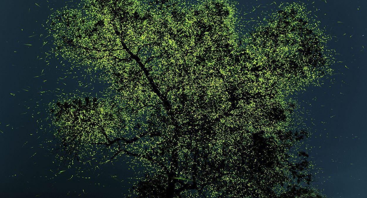 פוטו תחרות צילומי טבע The Nature Conservancy גחליליות