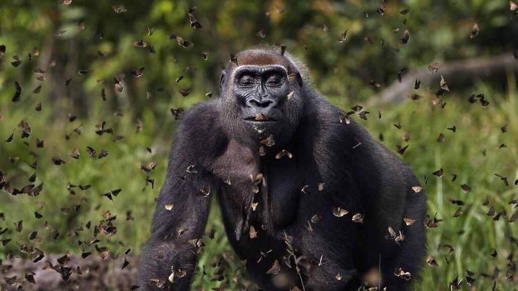 יופי של טבע: תמונות זוכות מתחרות צילומים