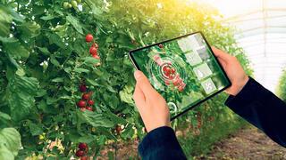 פיתוח בתחום חקלאות חכמה