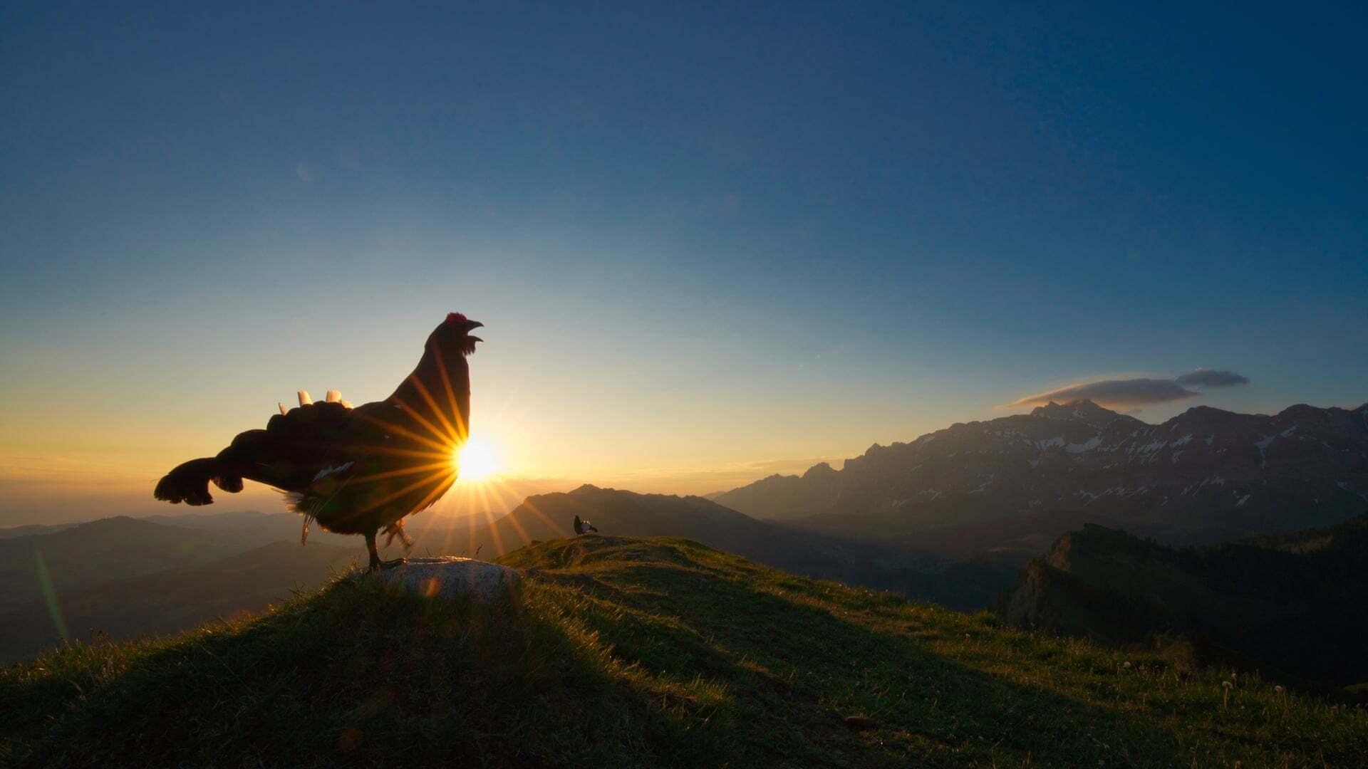 צילום: Levi Fitze /2021 bird photographer of the year