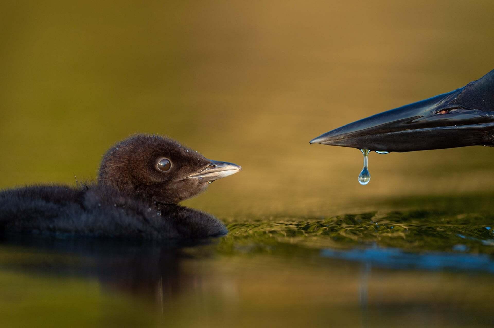 צילום: Raymond Hennessy /2021 bird photographer of the year
