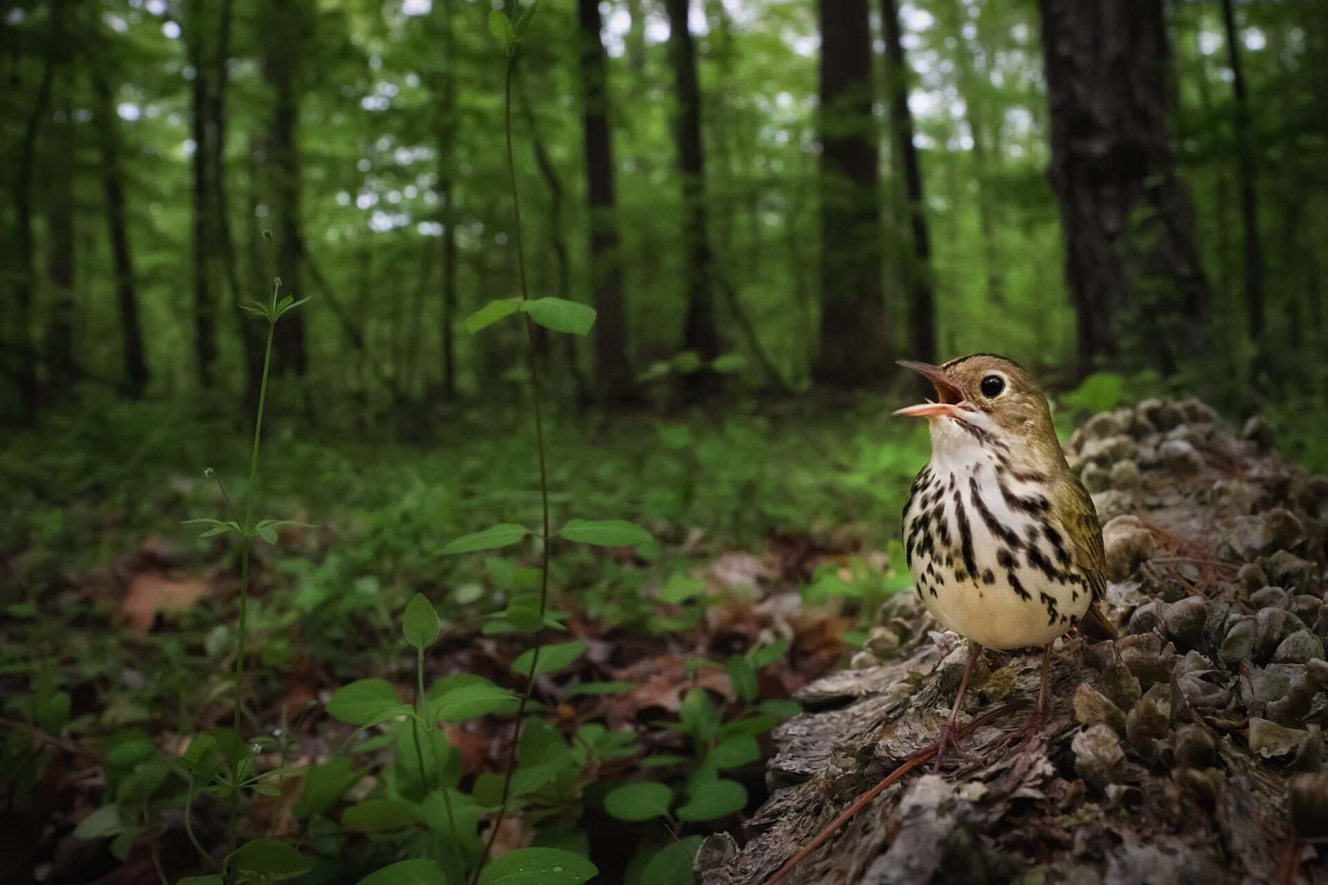 צילום: oshua Galicki /2021 bird photographer of the year